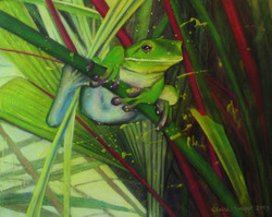 tree frog in lipstick palm