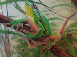 green tree frog 1