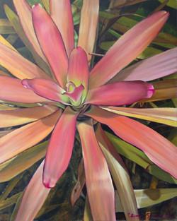 the warm glow of a bromeliad