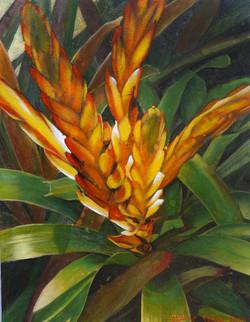 fiery bromeliad