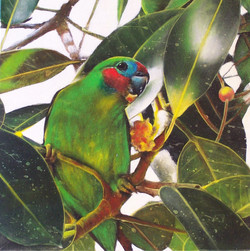 fig parrot 7