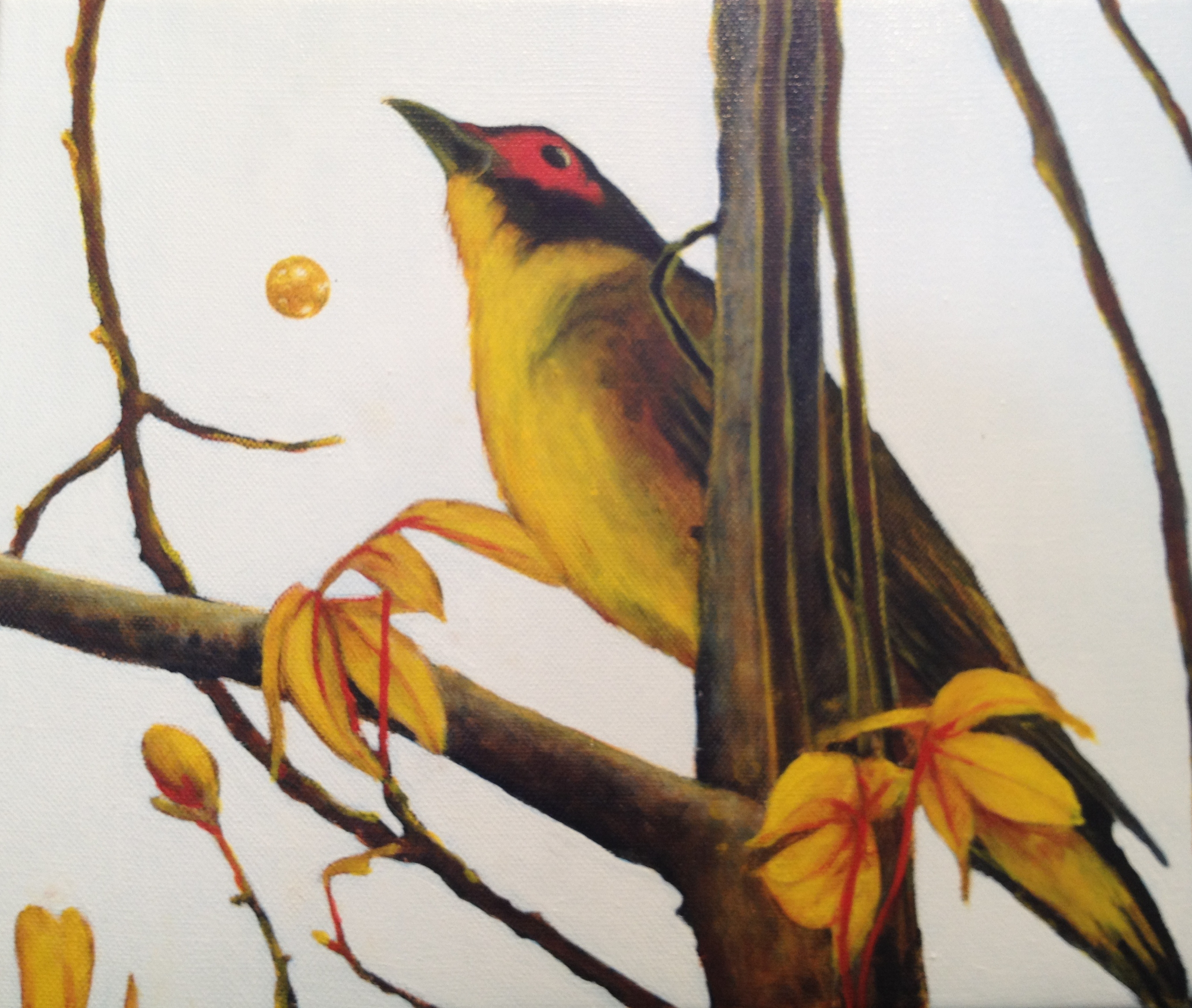 fig bird 3
