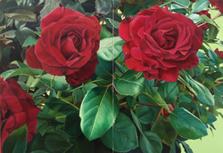double scarlet rose