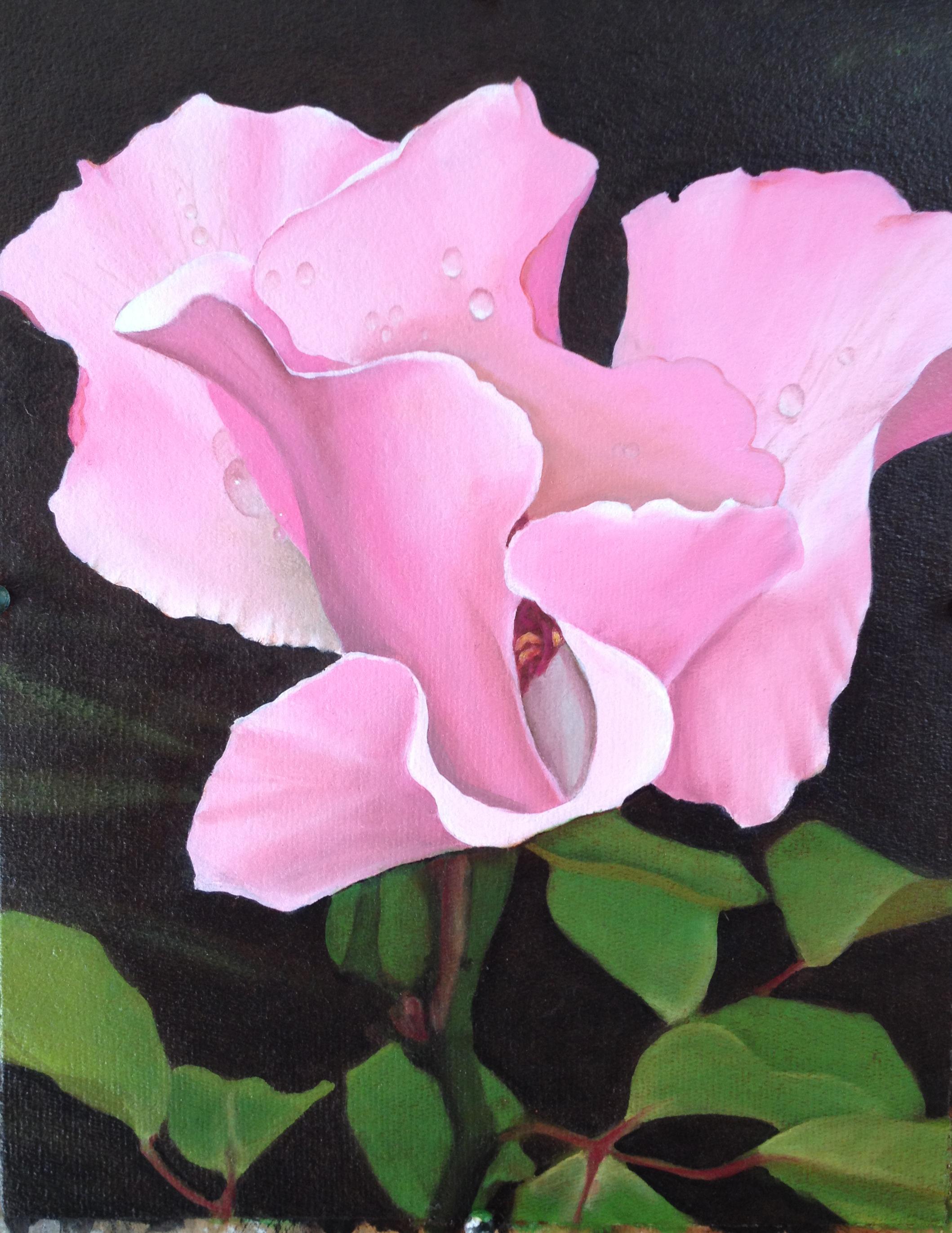 Necia's rose 1