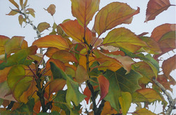 """I love autumns everywhere"""
