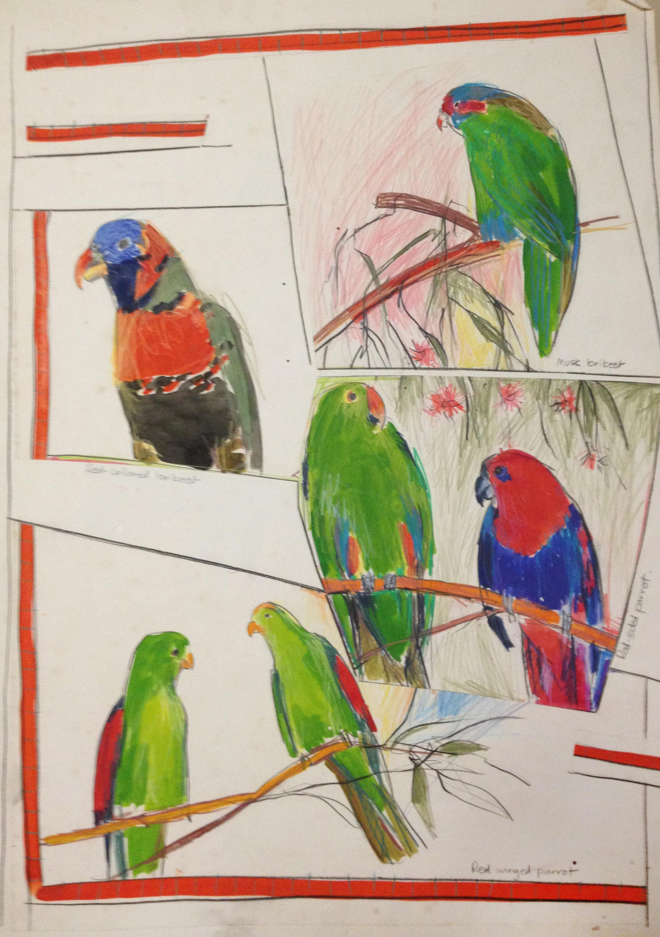 assorted parrots