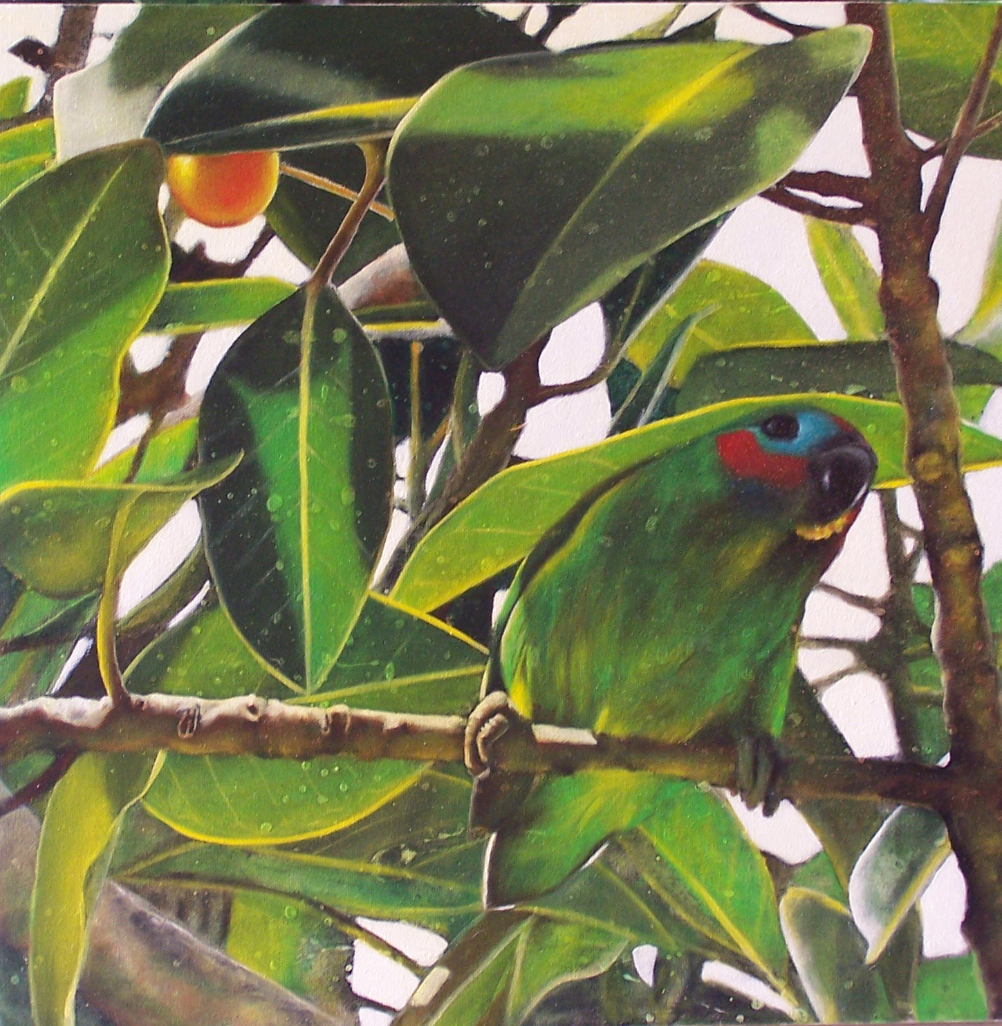 fig parrot 8
