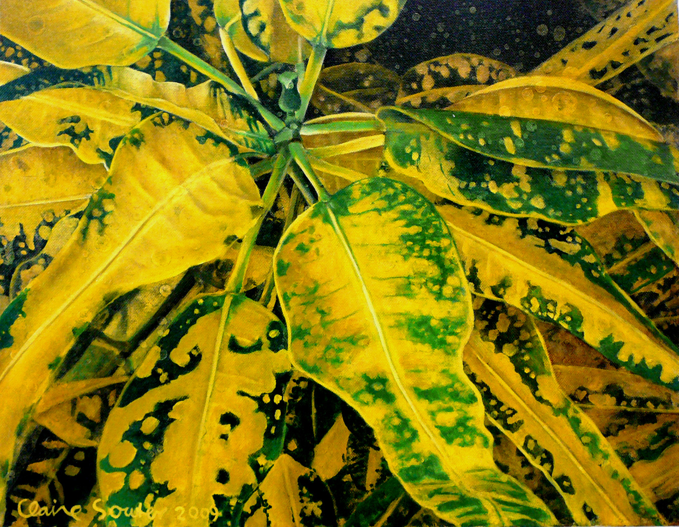yellow and green croton 4