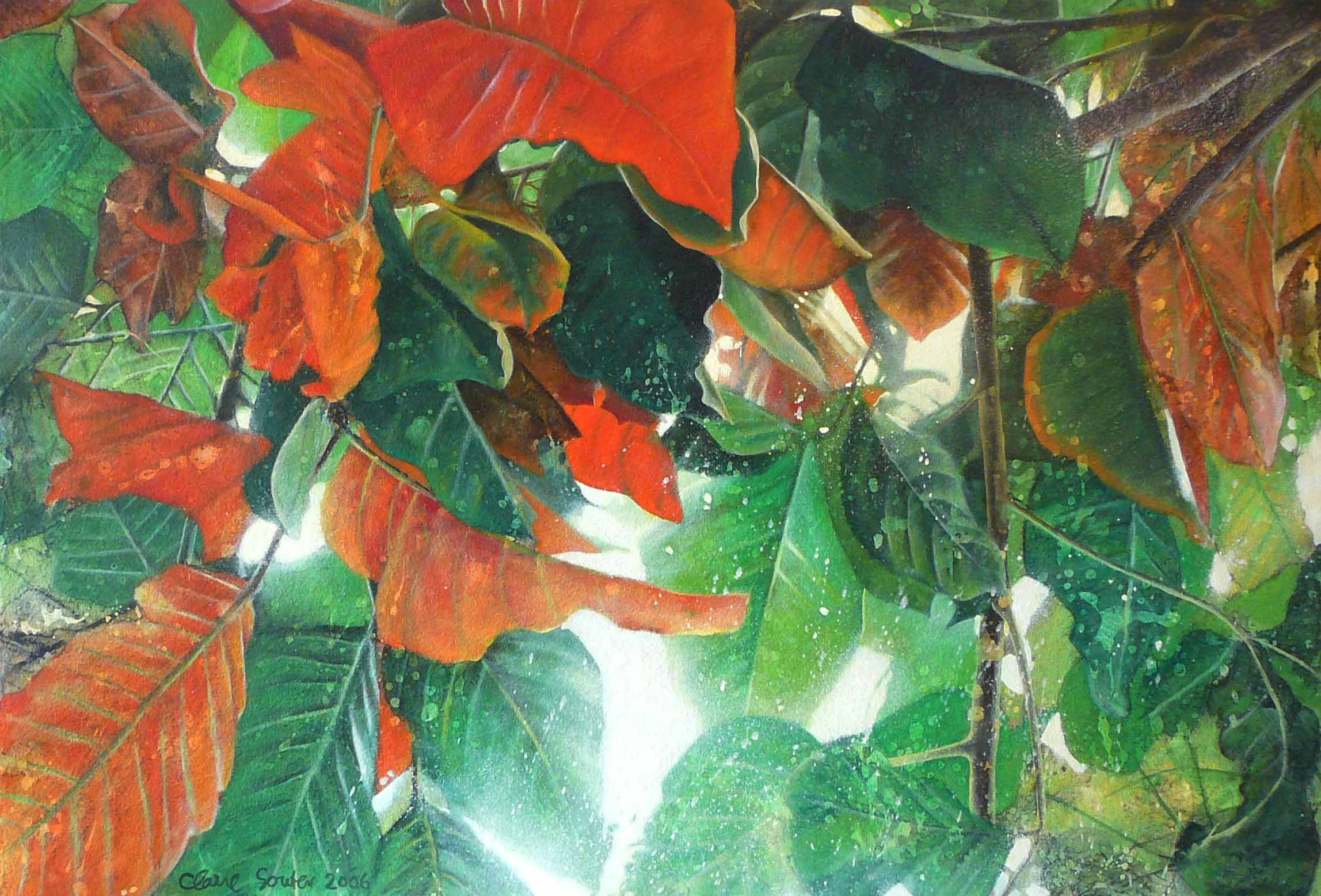 splash of santol leaves