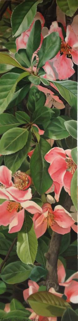 blossom in Qingdao