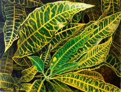yellow and green croton 1