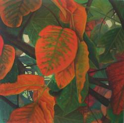 santol leaves 3