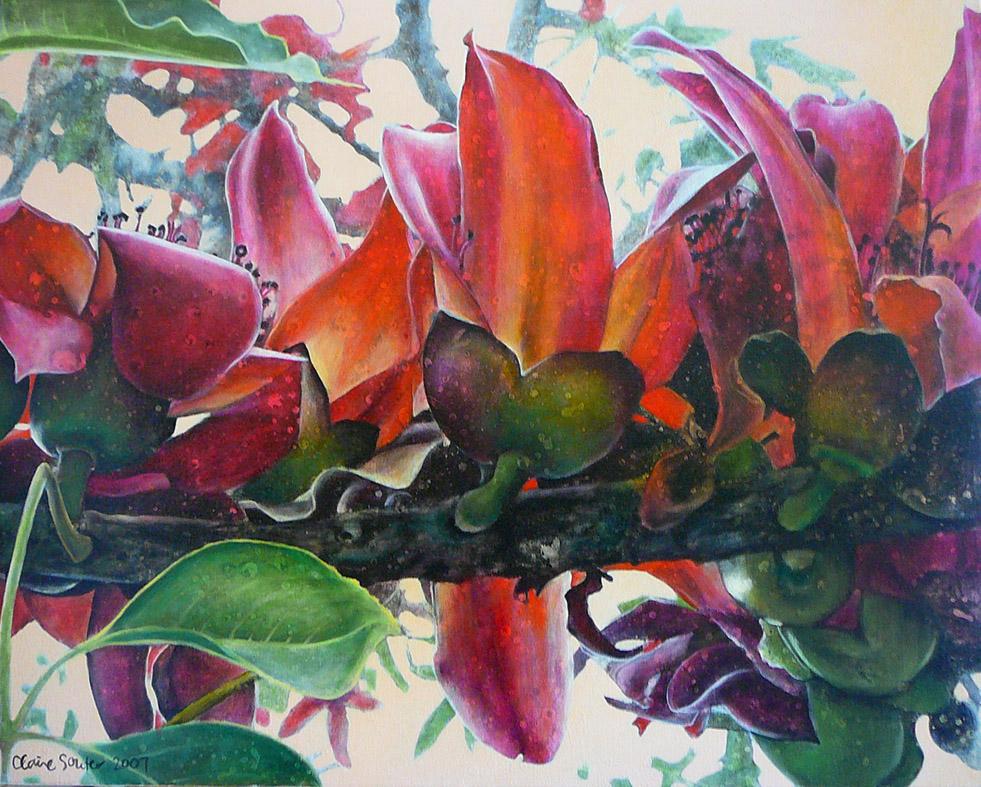 red silk cotton tree 2