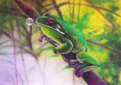 green tree frog 5