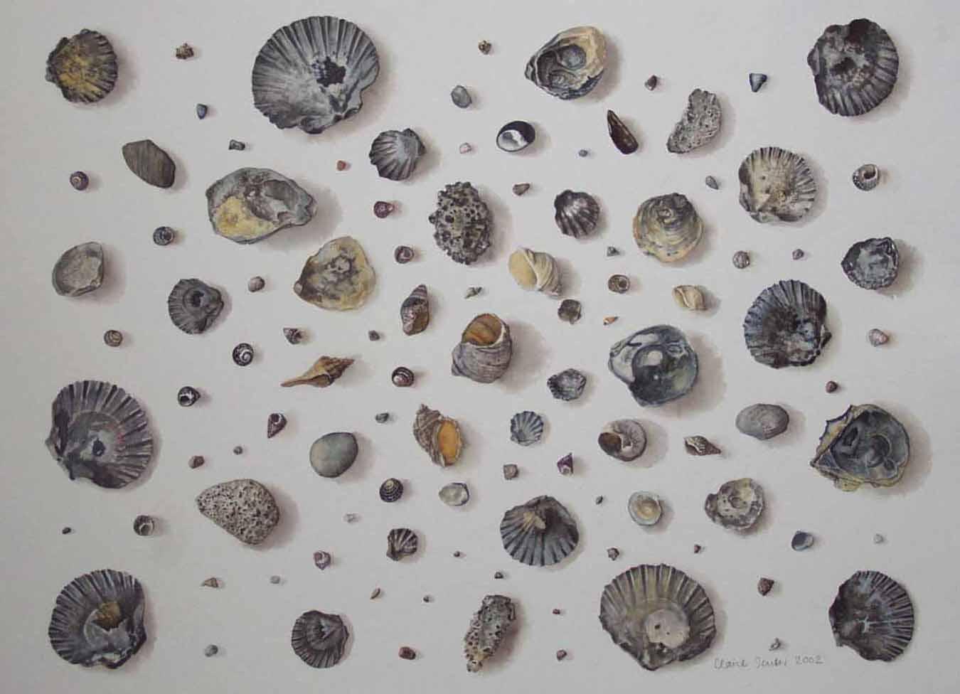 grey shells