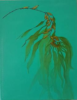 the seaweed