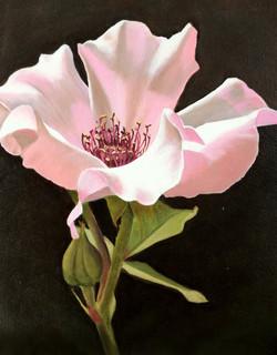 Necia's rose 3