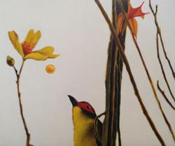 fig bird 1