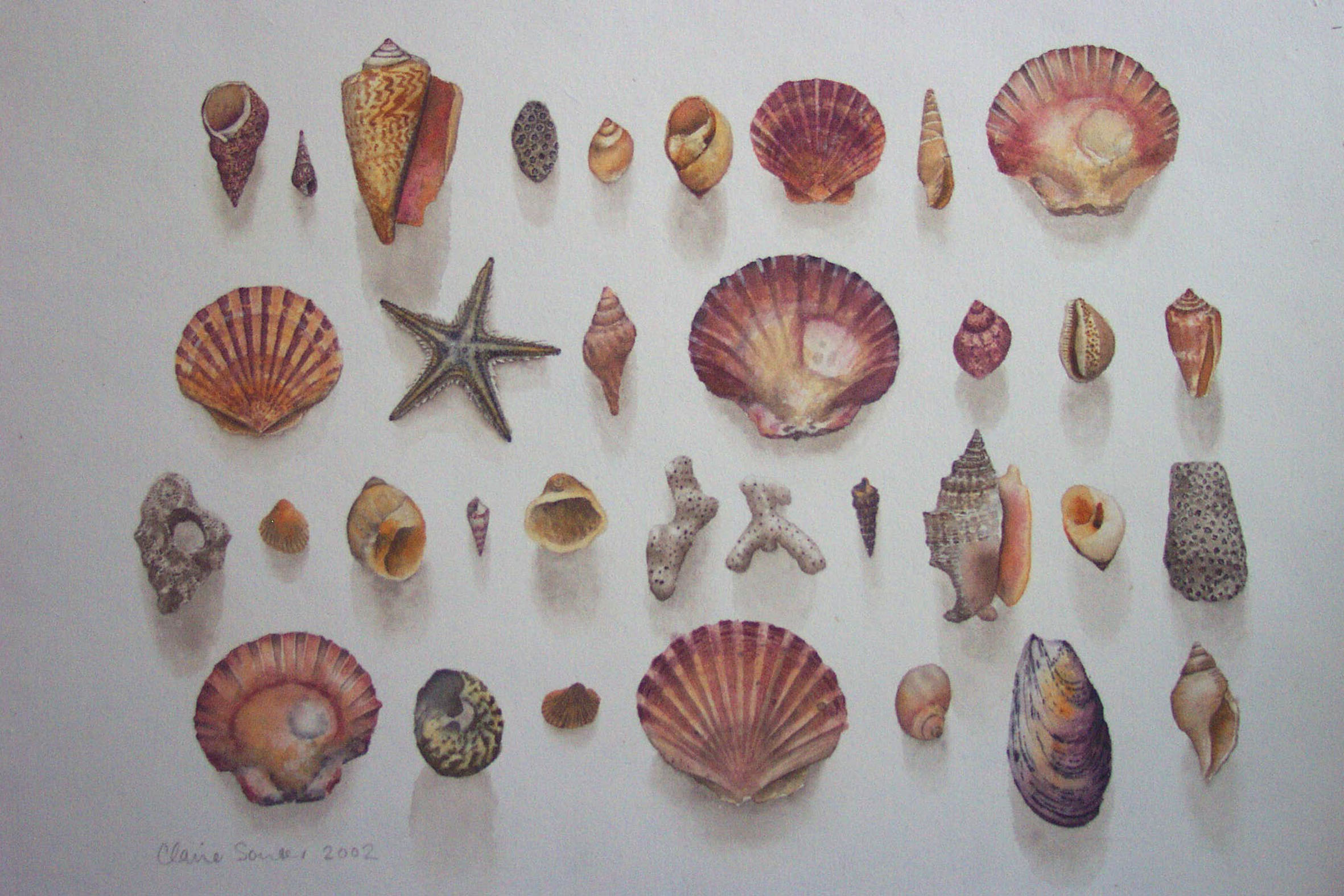 Anne's shells