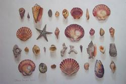 Anne's shells