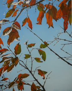 """beyond multi-coloured leaves"""