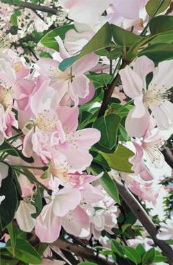 Qingdao cherry blossom part 2