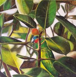 fig parrot 5