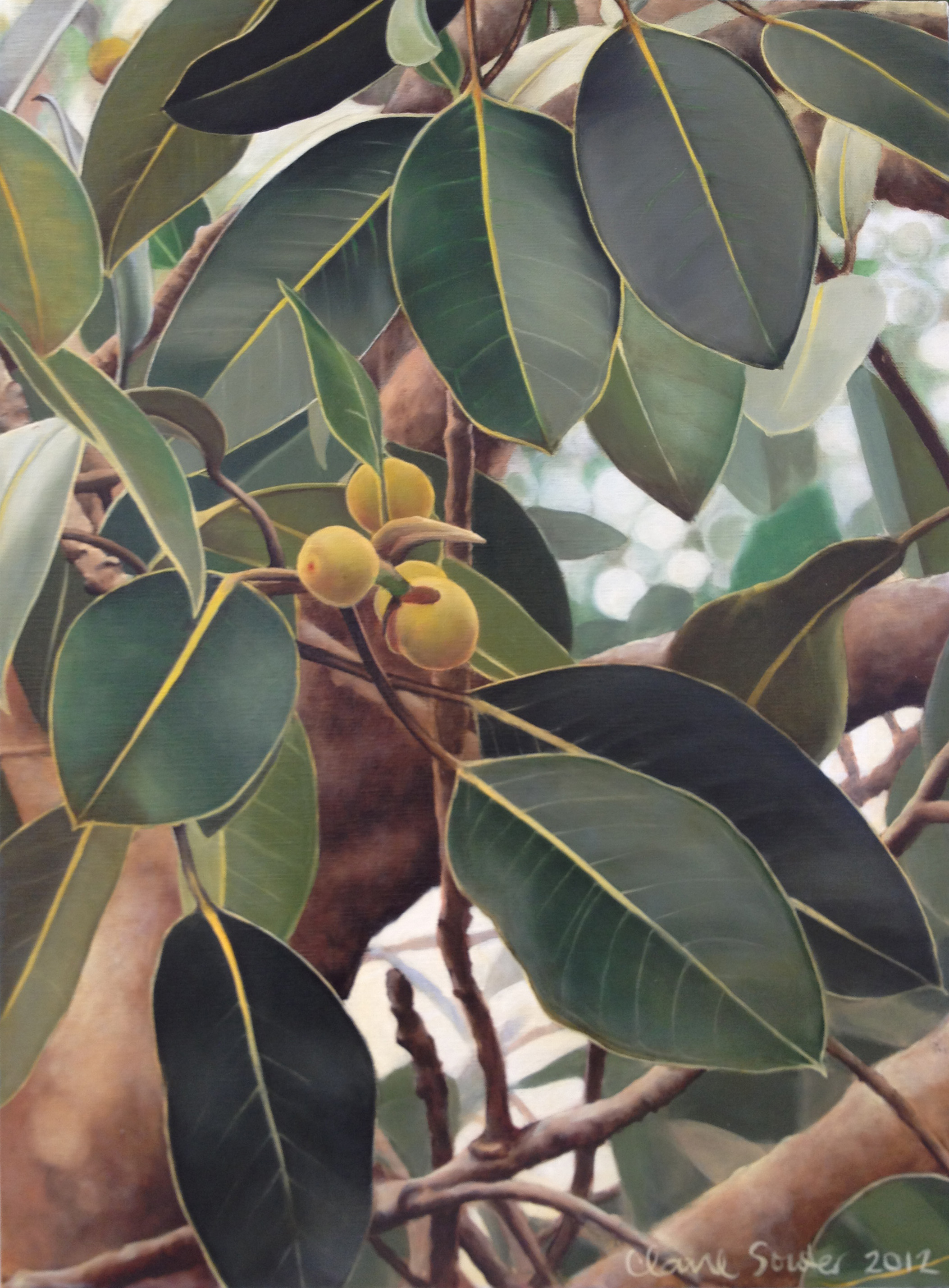 figs for the fig parrot