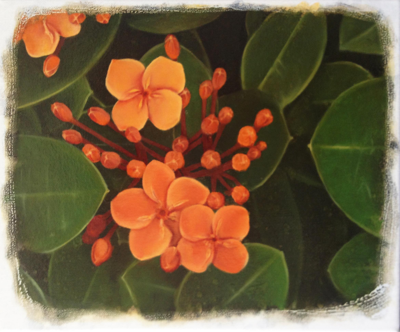 Gondwana's garden #16