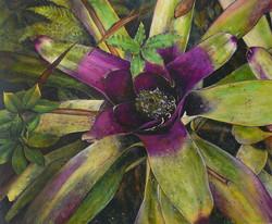 purple centre bromeliad