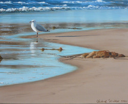 the seagull and seaweed
