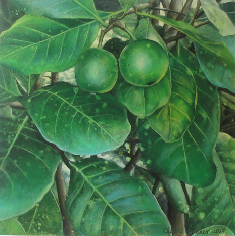 native gardenia 2