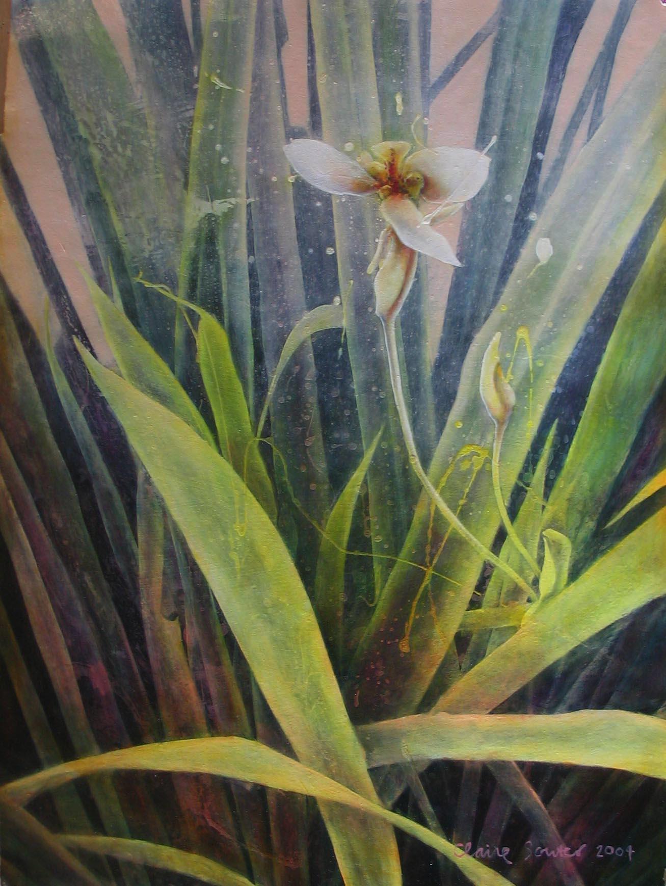 fan iris 1