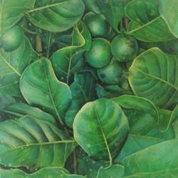native gardenia 1