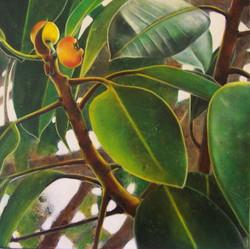 fig parrot 4