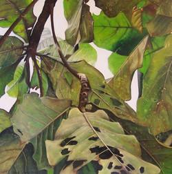 opaque leaf