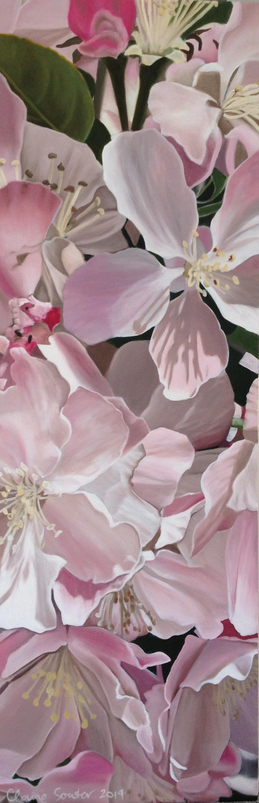pale pink Qingdao blossom