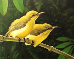 fledgling sunbirds 1