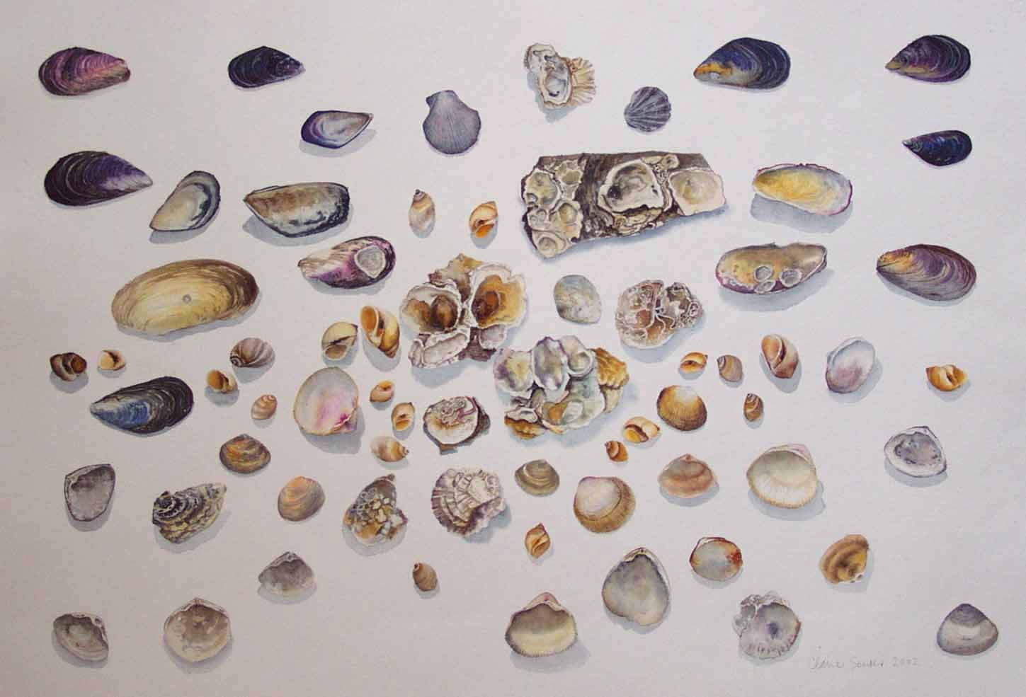 shell shapes