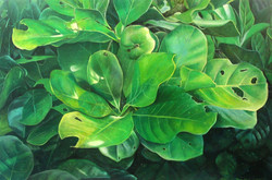 native gardenia