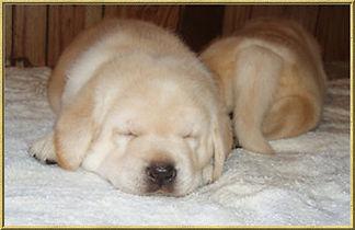 Puppy Page photo 1.jpg