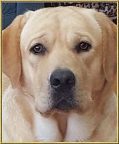 Puppy Page photo 2.jpg