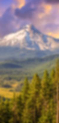ORP Edited Shutterstock-9.jpg