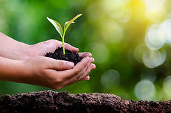 environnement-jour-terre-dans-mains-arbr