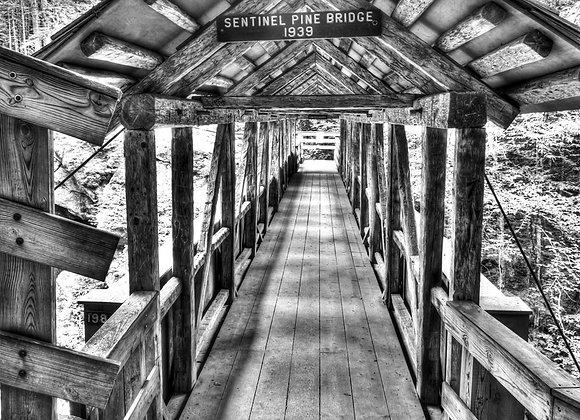 Sentinal Pine Bridge IMG 8088