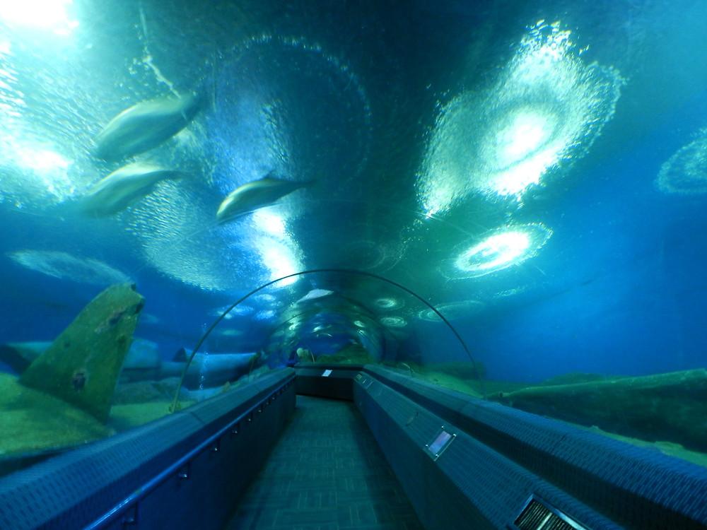 underwater world things to do in Pattaya