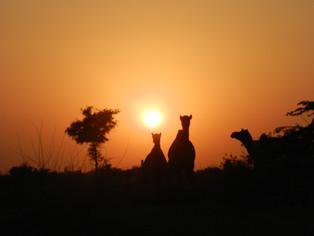 The Thar Desert Camel Safari Adventure, Rajasthan   India