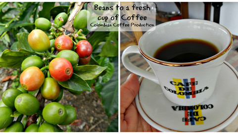 From Seeds to Coffee: How first class Colombian Coffee is made