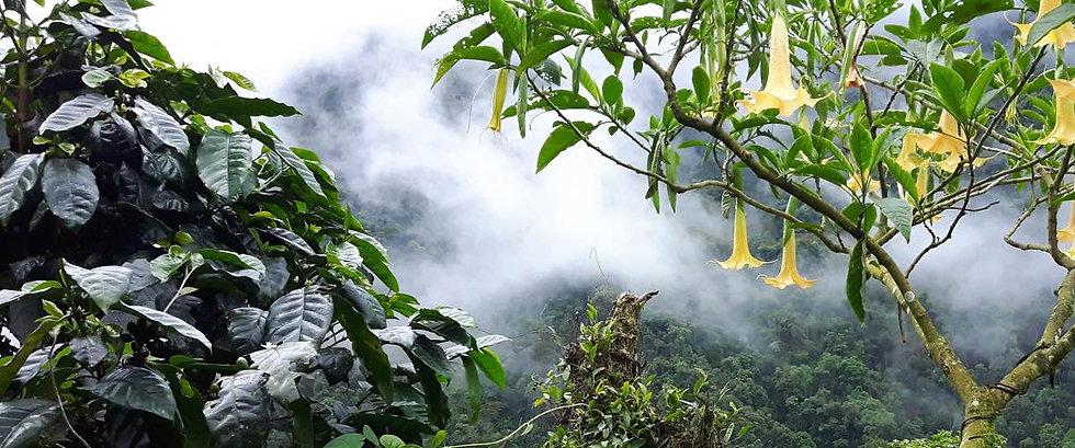 view of Valle del Cauca