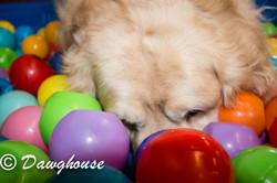 dawghouse feb-11